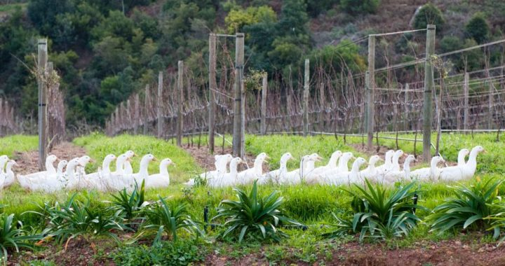 Biodynamic wines compared with organic and conventional wines